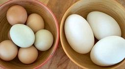 Bà bầu ăn trứng ngỗng có tác dụng gì