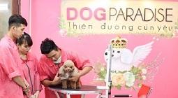 Top 10 cửa hàng dịch vụ chăm sóc thú cưng tại TPHCM tốt nhất